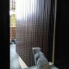 filet de protection pour fenetre contre la chute de votre animal - O'ptitsfélins Annecy