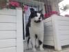 filet de protection pour terrasse contre la chute de votre animal - O'ptitsfélins Annecy