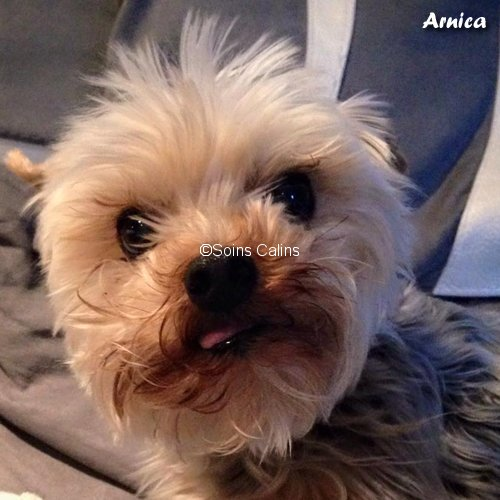 arnica_fb