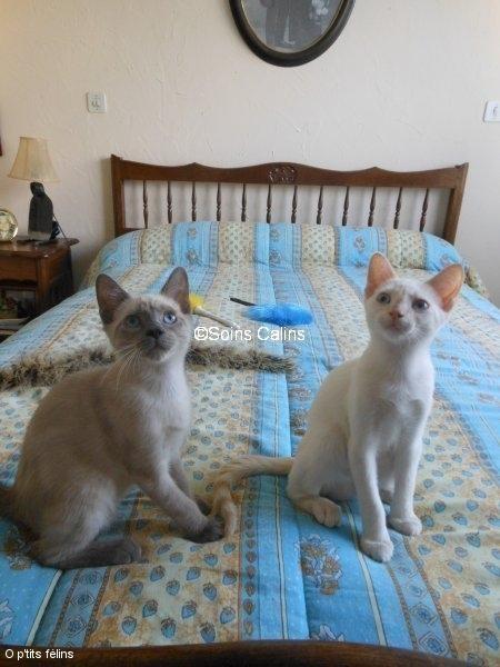 Igor & Igloo
