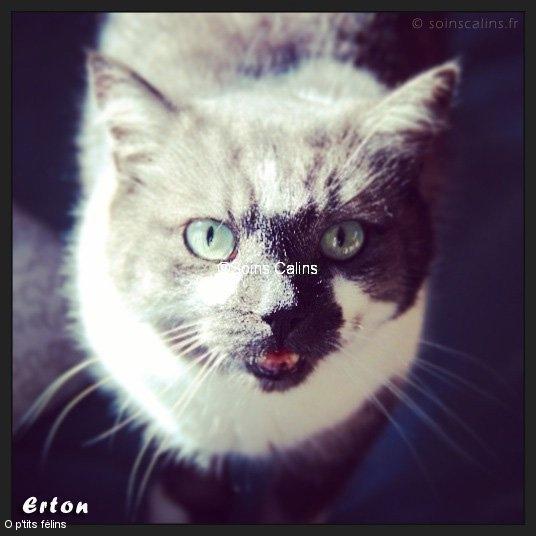 erton_fb