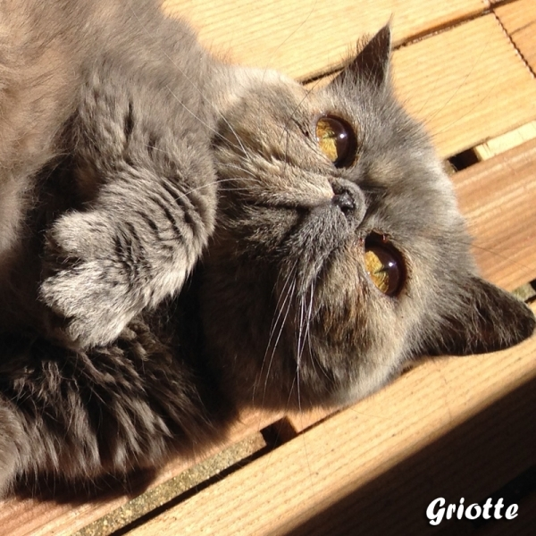 griotte_fb1