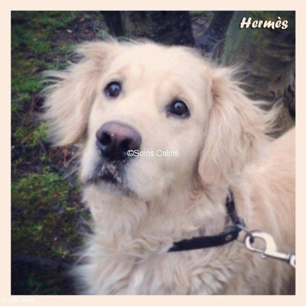 hermes_fb