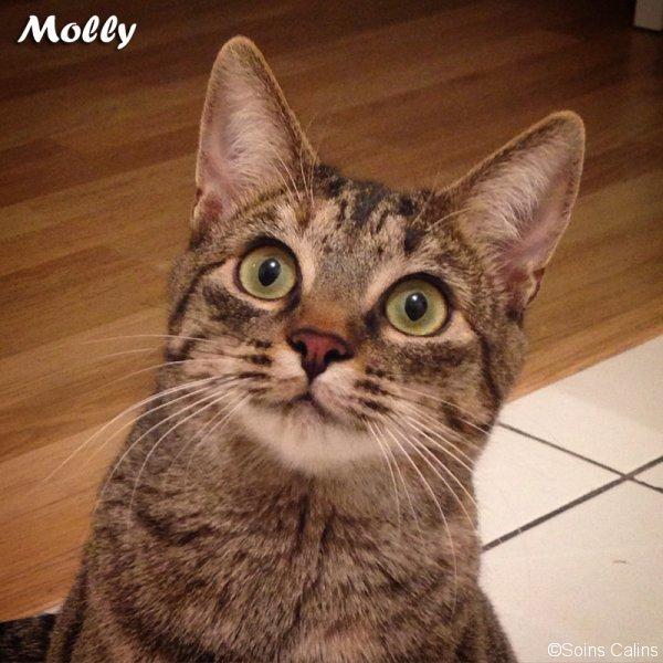 molly_fb