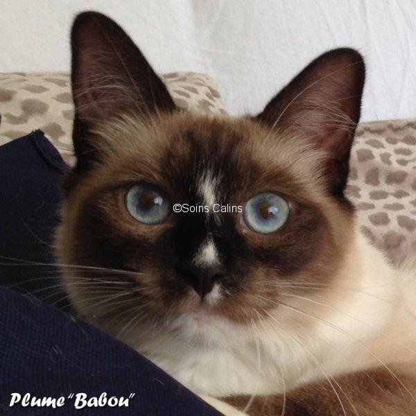 plume_babou
