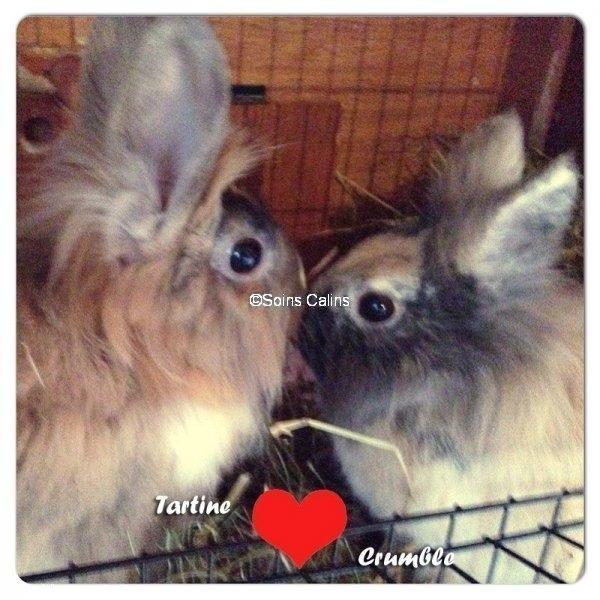 tartine_crumble_fb
