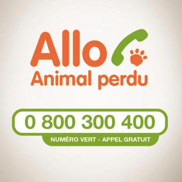 Allo animal perdu - icad - SPA marlioz - Un chat ou pas Couper les griffes de son chat - Ô p'tits félins, garde et visite de chats Annecy