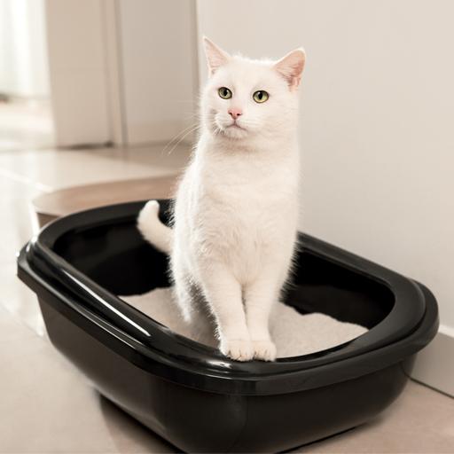Chat urine hors litière - Ô p'tits félins, garde et visite de chats Annecy
