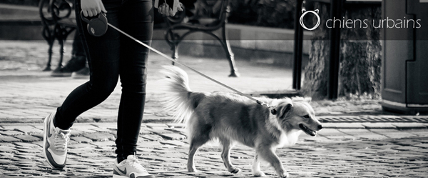 Ô Chiens Urbains – balades canines urbaines