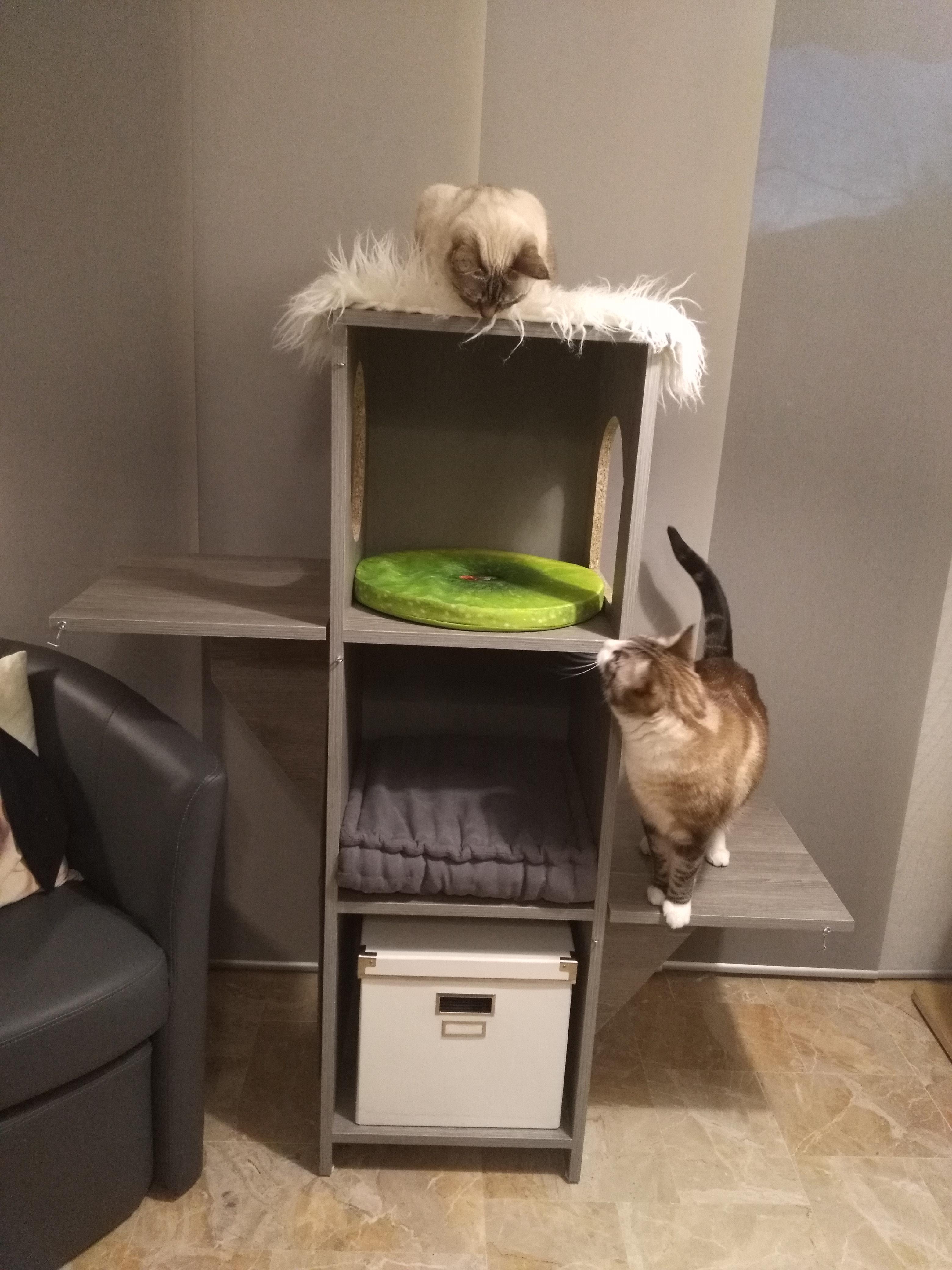Arbre A Chat A Faire Maison l'arbre à chat : indispensable? - Ô p'tits félins - garde