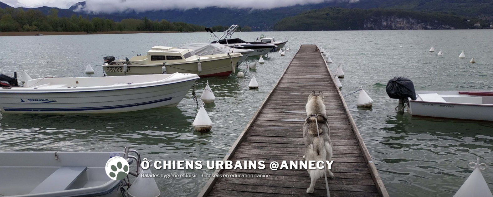 Ô Chiens Urbains – balades canines, conseils
